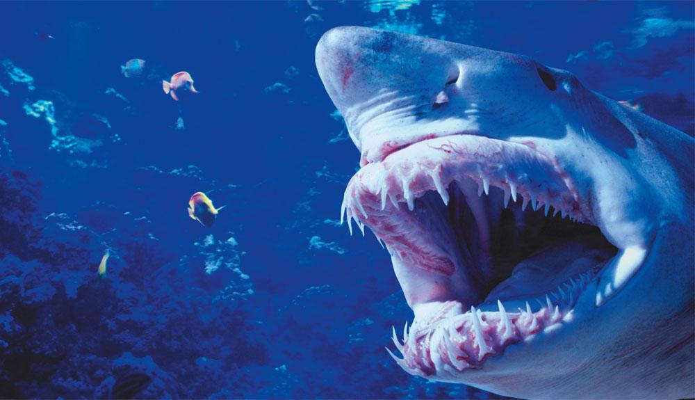 Peligro ¡tiburón!