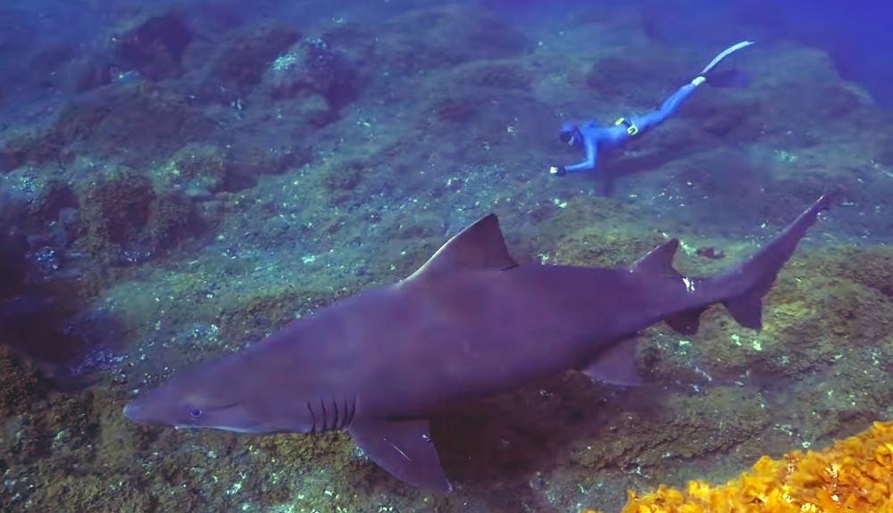En defensa del primer Parque Nacional 100% marino de España