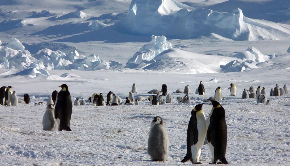 La Antártida en dron, y en 4K