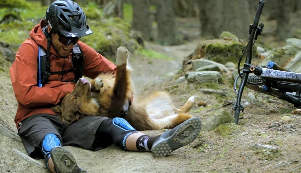 """""""Paws and Wheels"""", un homenaje a todos los perros aventureros"""