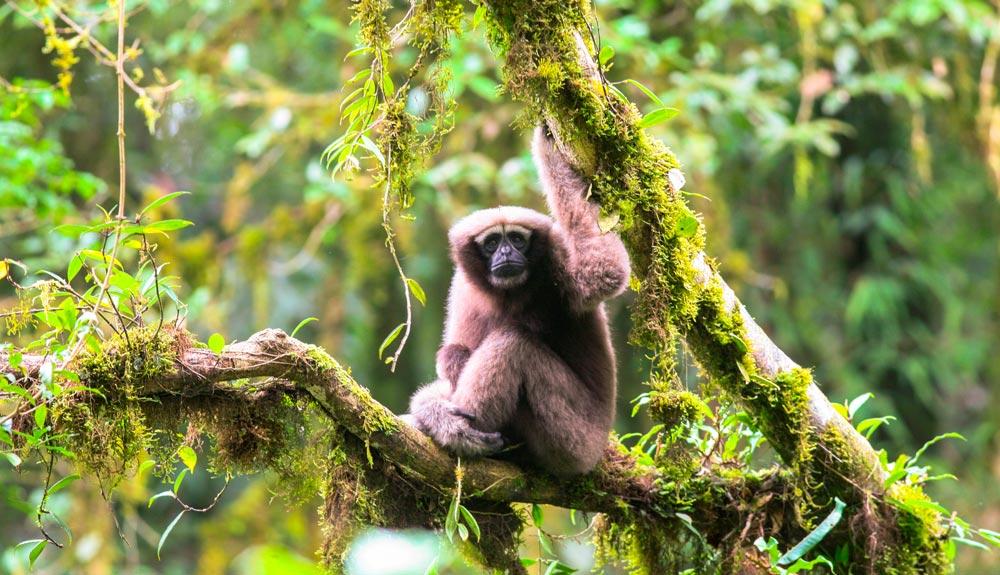 Más de 150 nuevas especies descubiertas en el Gran Mekong