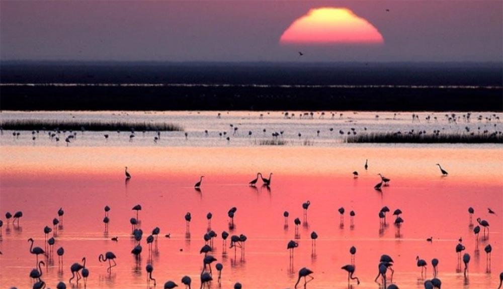 Doñana sigue en peligro