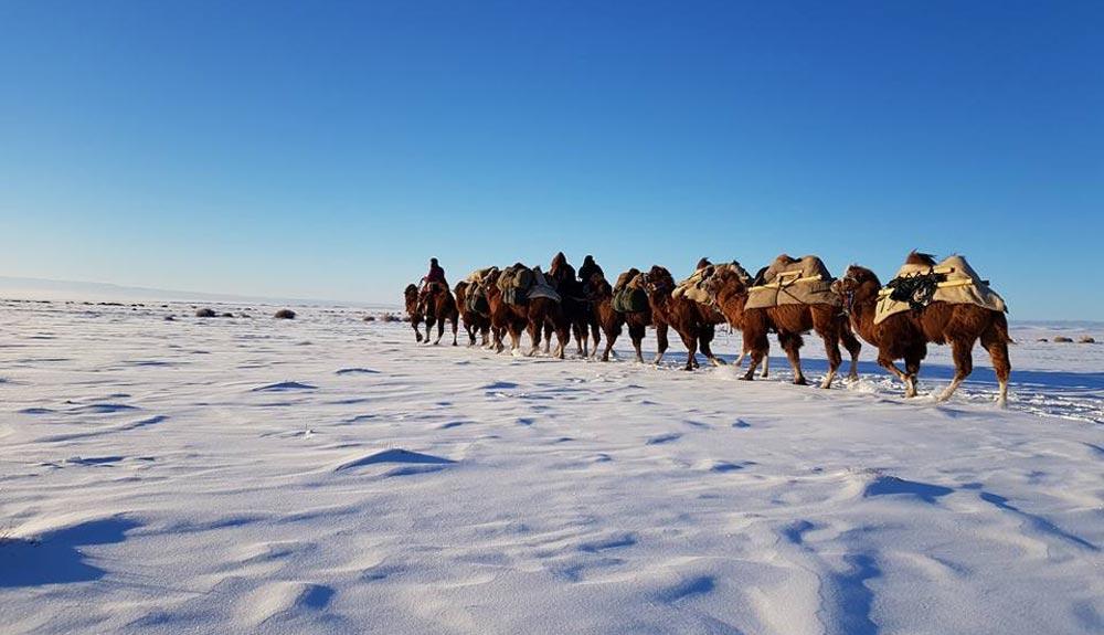 De Mongolia a Londres: 12.000 km con camellos