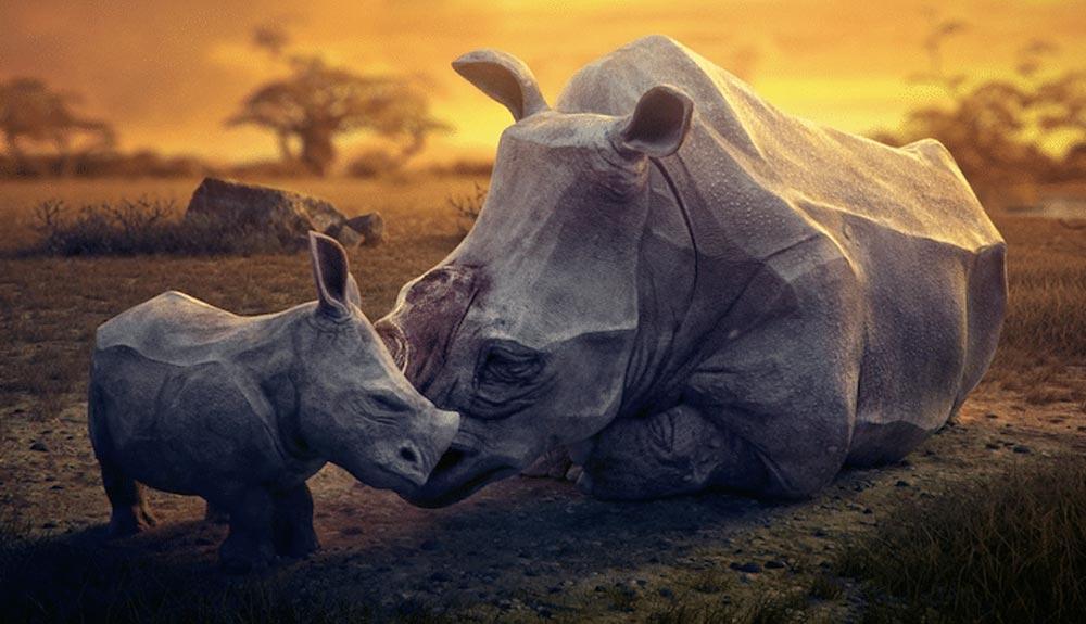 ¿Con qué sueñan los animales en peligro de extinción?