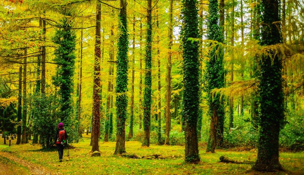 5 bosques desconocidos para primavera y otoño