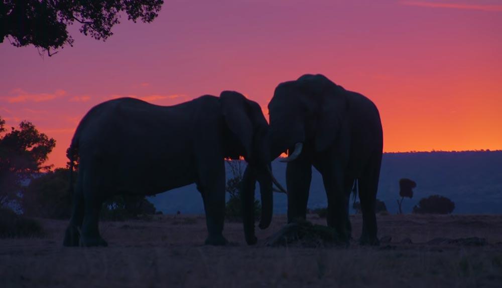 Drones para proteger los elefantes de Kenia