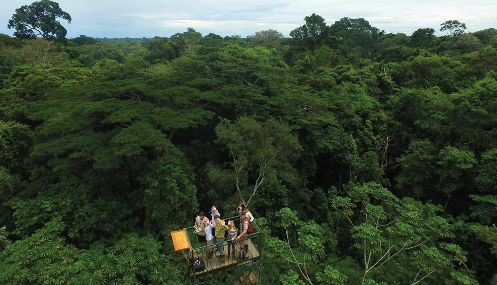 Vacaciones científicas para conservar la selva