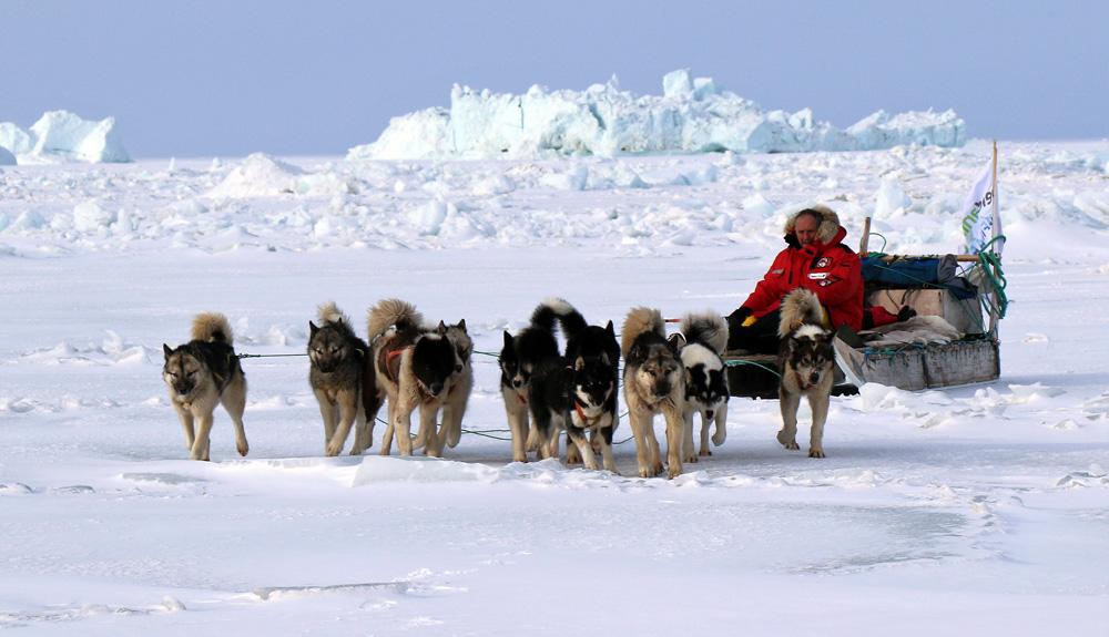 """""""En Groenlandia, perros y humanos se ayudan mutuamente a sobrevivir"""""""