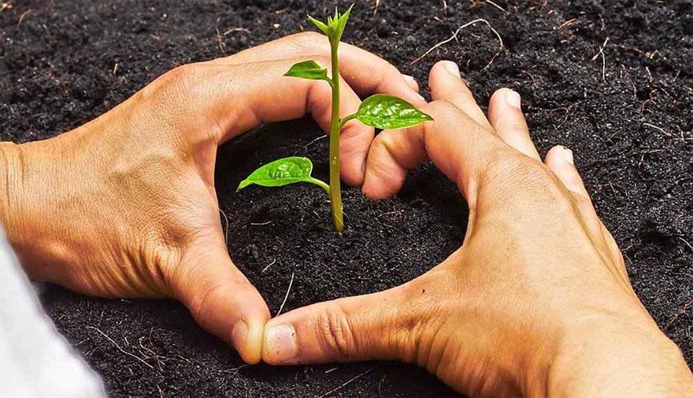 Únete a la Plantación por el Clima