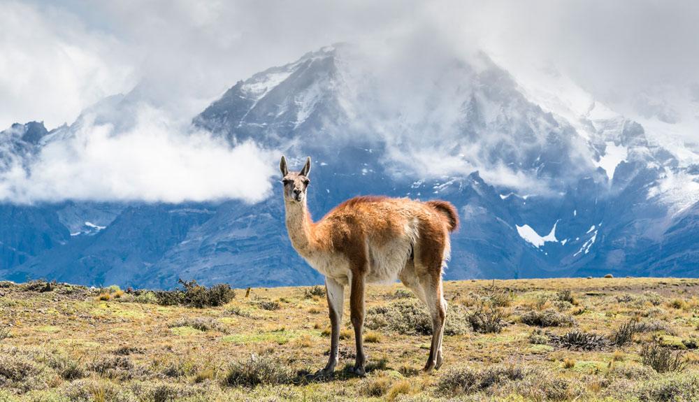 Patagonia salvaje, en vídeo